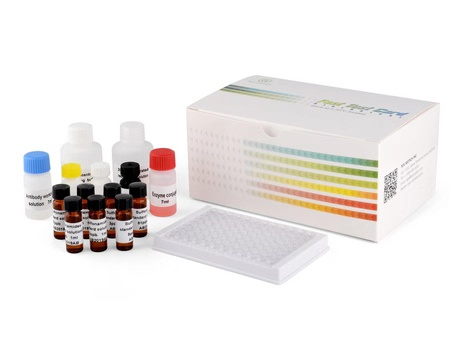 Amoxicillin ELISA Test Kit